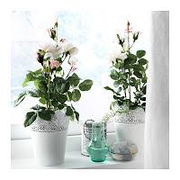 FEJKA: Ikea Rosa specie varie