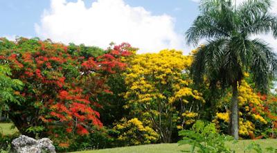Danilo Medina crea el Jardín Botánico de Santiago