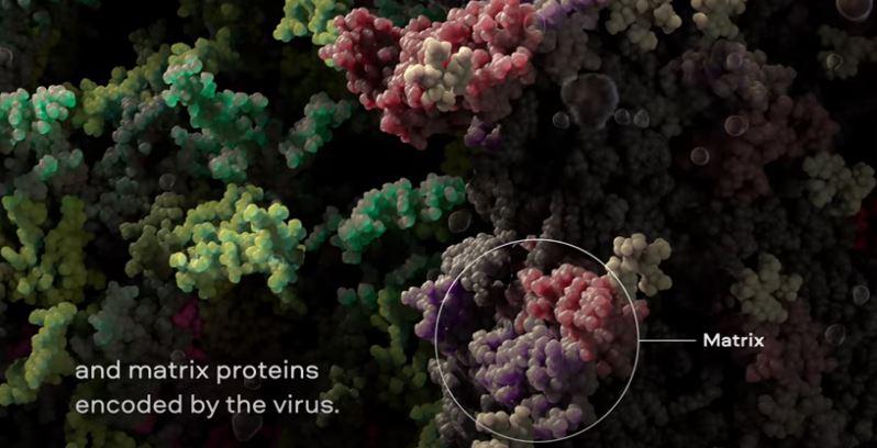 شاهد.. فيديو ثلاثي الأبعاد يكشف عن فيروس كورونا حتى المستوى الذري