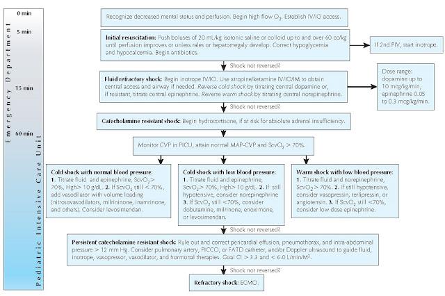 Algorithm for management of pediatric septic shock.