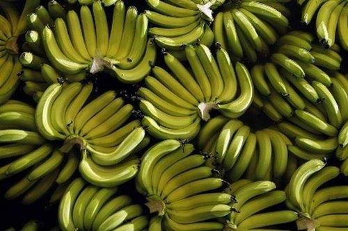 Banana Trading Business Idea - A Garde Banana