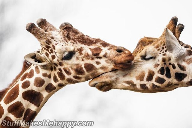 Sometimes Animals Can Be More Loving Than Humans, and Here Are 17 Adorable Animal Pictures to Prove It