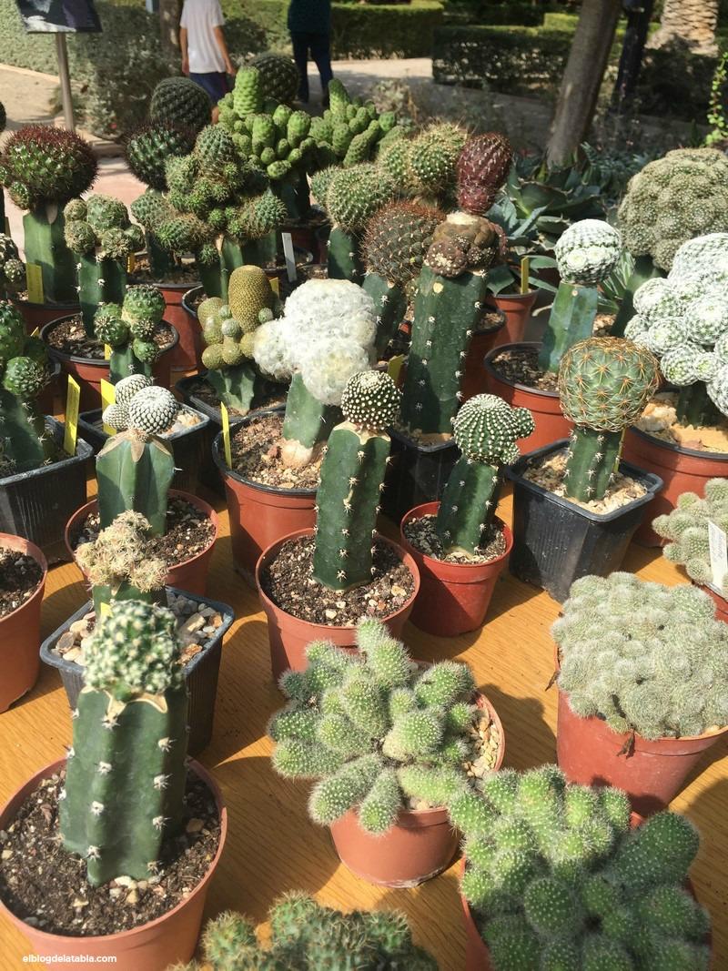 V Encuentro de Otoño de Cactus y Suculentas en Jardín Botánico de Valencia