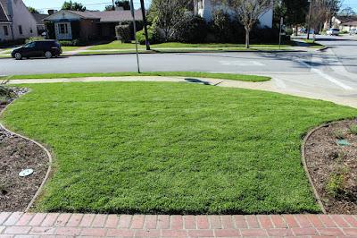kurapia grass Seeds, Reviews, Problems, Care