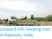 http://sciencythoughts.blogspot.com/2019/07/leopard-kills-sleeping-man-in-rajastan.html