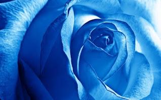 ورد جوري ازرق جميل