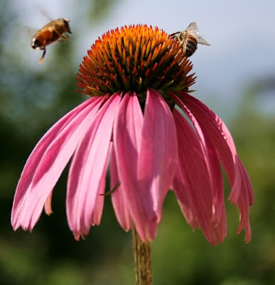 The lowly honeybee has an amazing internal guidance system to enable them to land on all kinds of inclines. Scientists, who believe they are the products of chance, want to intelligently design products based on bee systems.