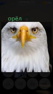 389 фото голова орла крупным планом с желтым клювом 12 уровень