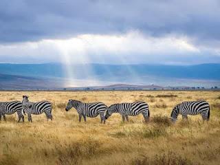Facts of Zebra #1