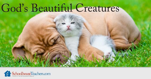 Text: God's Beautiful Creatures; SchoolhouseTeachers.com; dog & kitten photograph