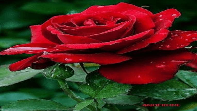 Puisi sakitnya mencintaimu