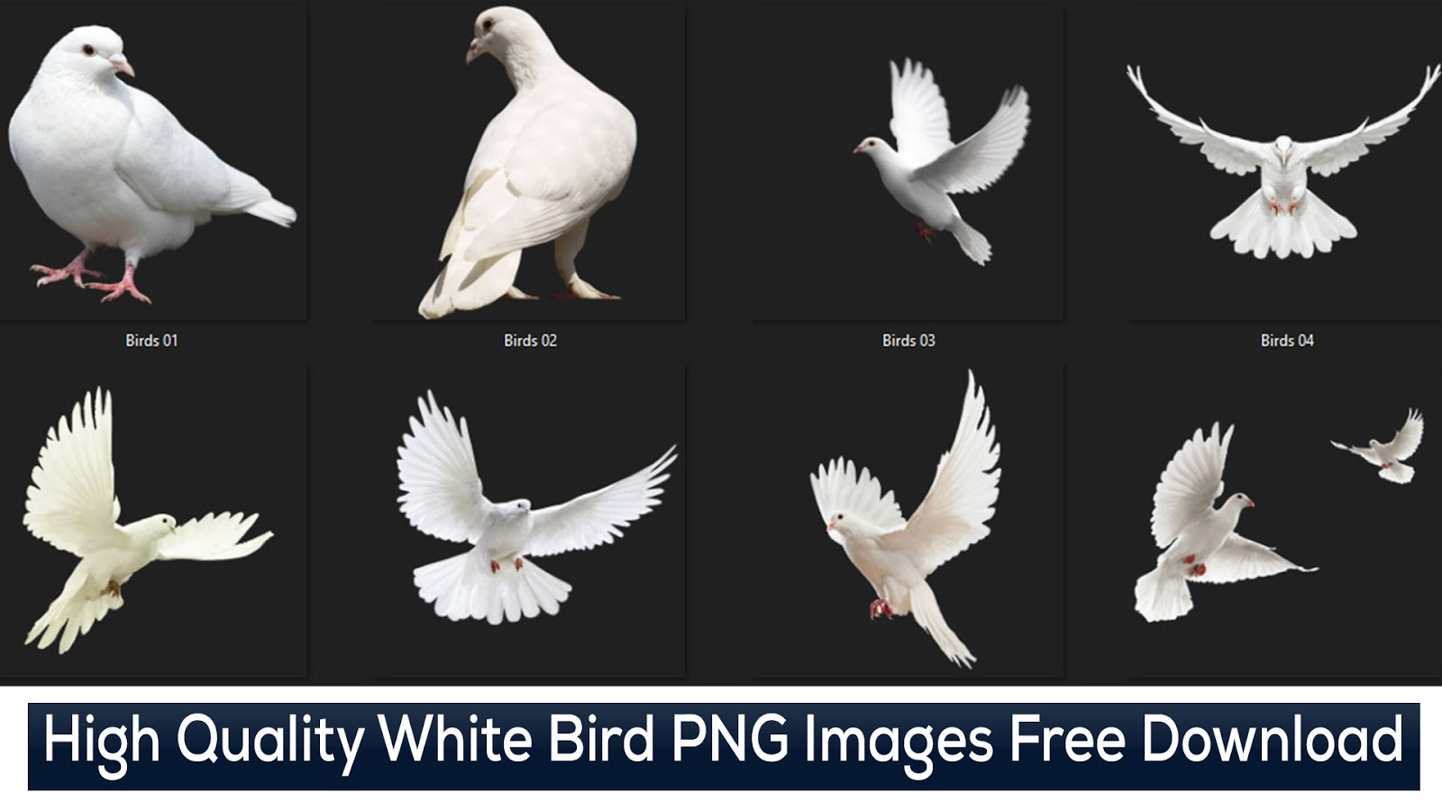 White Bird PNG Images - Birds PNG Images Free Download