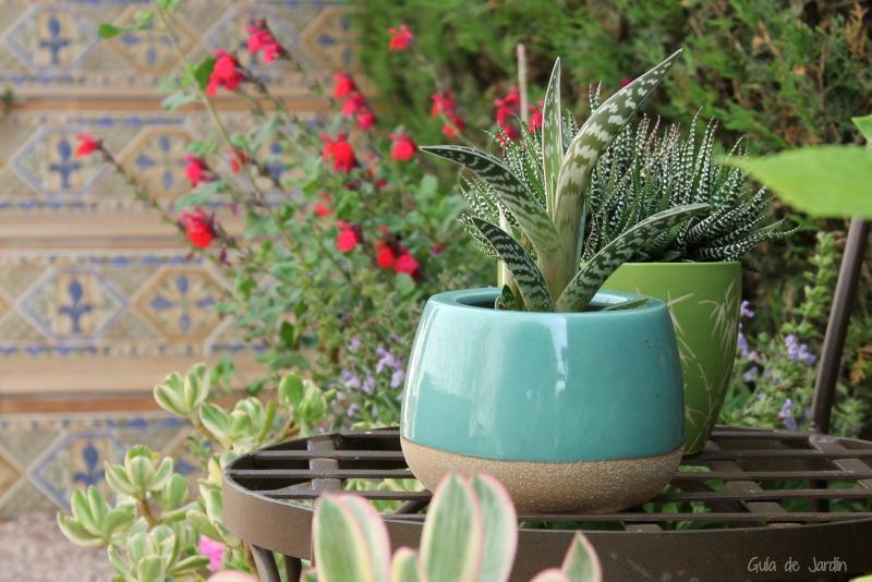 Salvia y suculentas