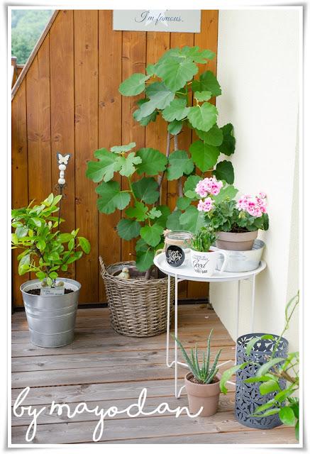 Kübelpflanzen