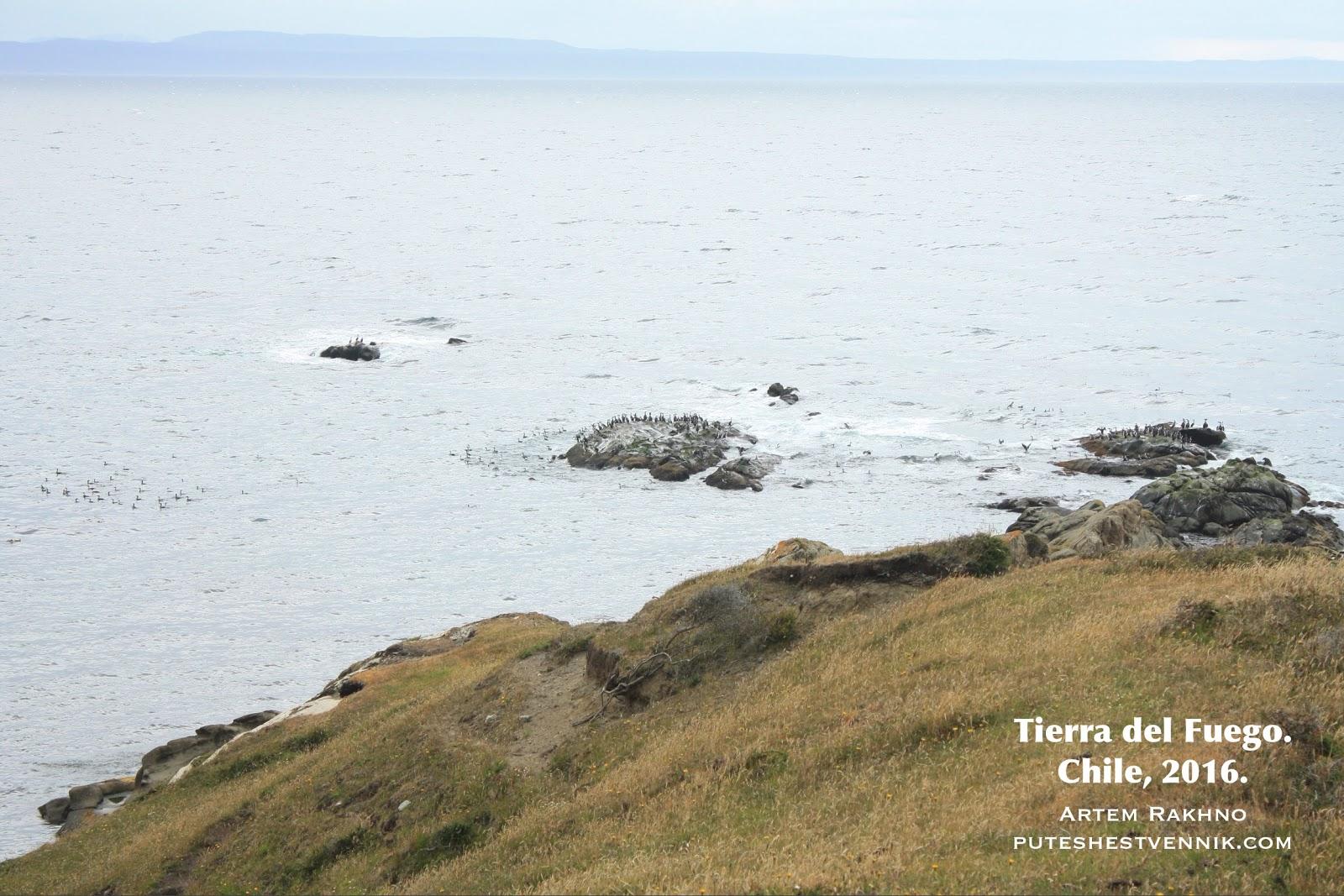 Птицы на прибрежных скалах
