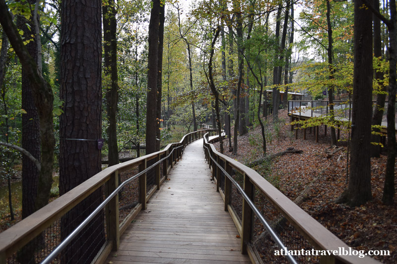 WildWoods and Fernbank Forest