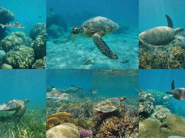مجموعة صور لسلحفاة المحيط تحت المياه
