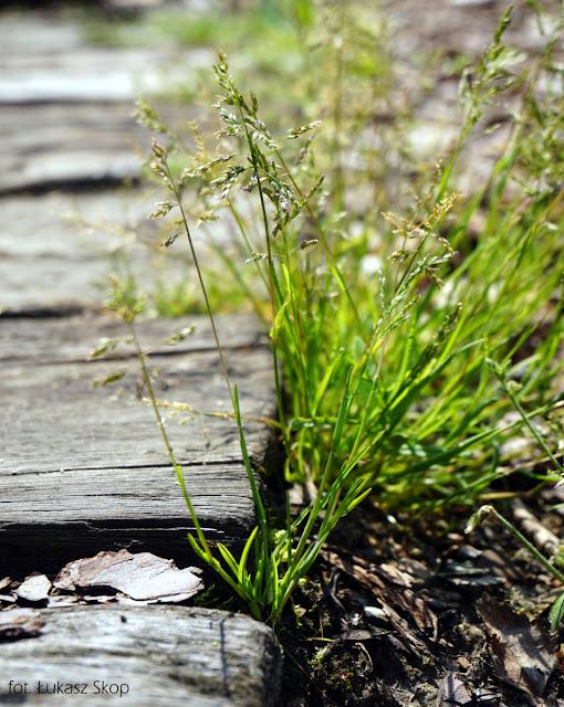 sekrety trawnika