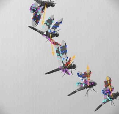 Flight of Dragonfly
