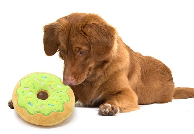 5 Of The Best Toys To Bond With Your Dog