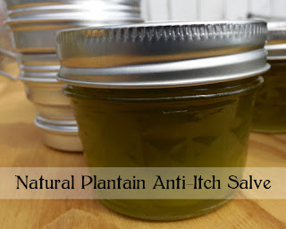 Natural Plantain Salve Recipe