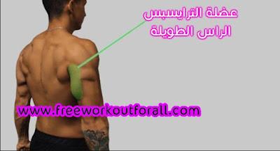 تمارين عضلة الترايسبس