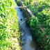 Tumpahan Minyak Cemari Sungai Kelekar Prabumulih