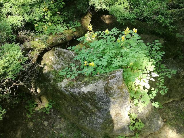 kamień w ogrodzie, ogród leśny