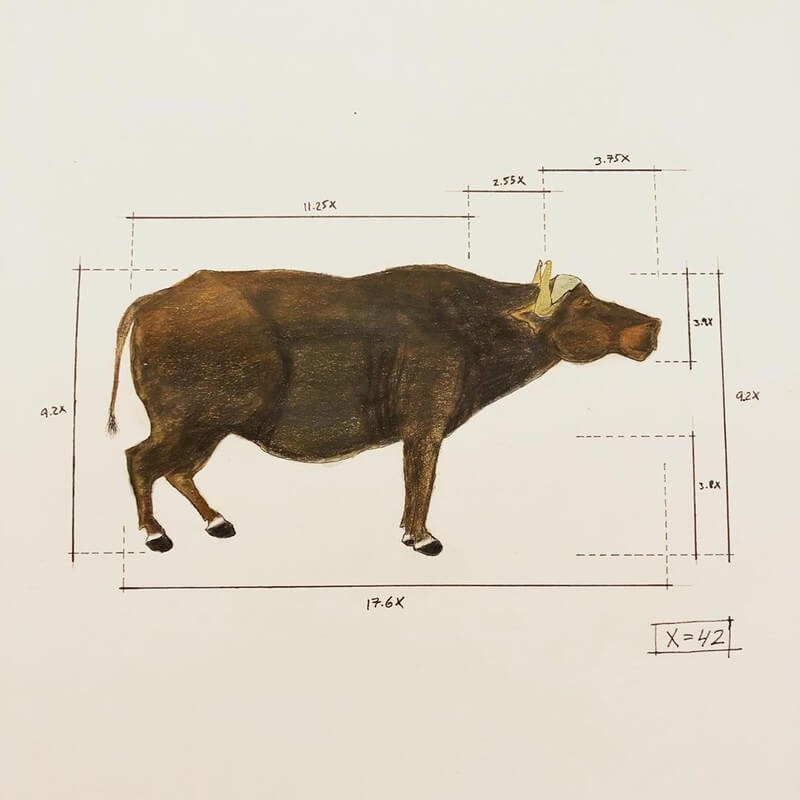 09-Water-Buffalo-Ran-Shapira-Animal-Drawings-from-a-Sculptor-s-Perspective-www-designstack-co