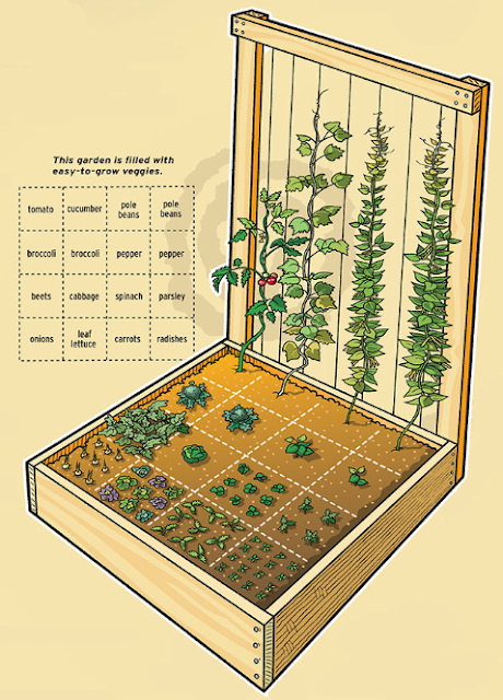 Tips Making Small Vegetable Garden at Home