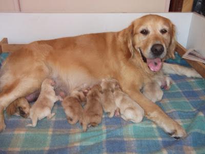 How do I find a reputable dog breeder?