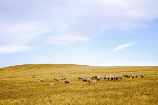 Find the land of earth and sky meeting, watching the vast golden autumn of the plain