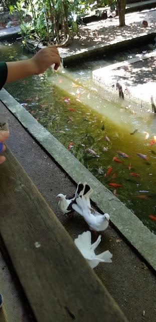 Penang Bird Park, bird park malaysia, taman burung, tourism, travel, malaysia travel book, penang travel, visit penang
