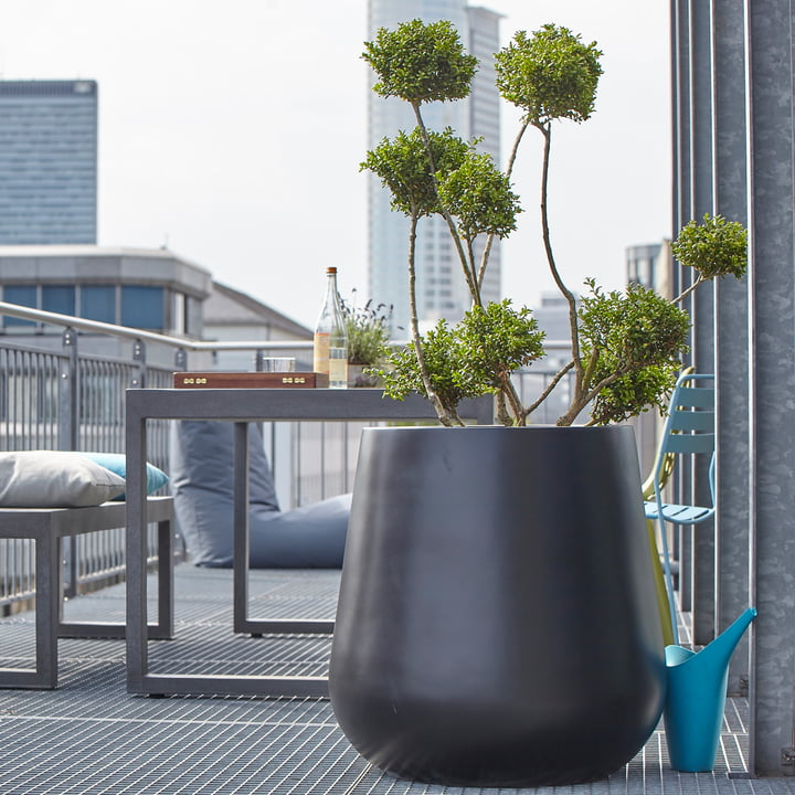 Balkonowe rośliny