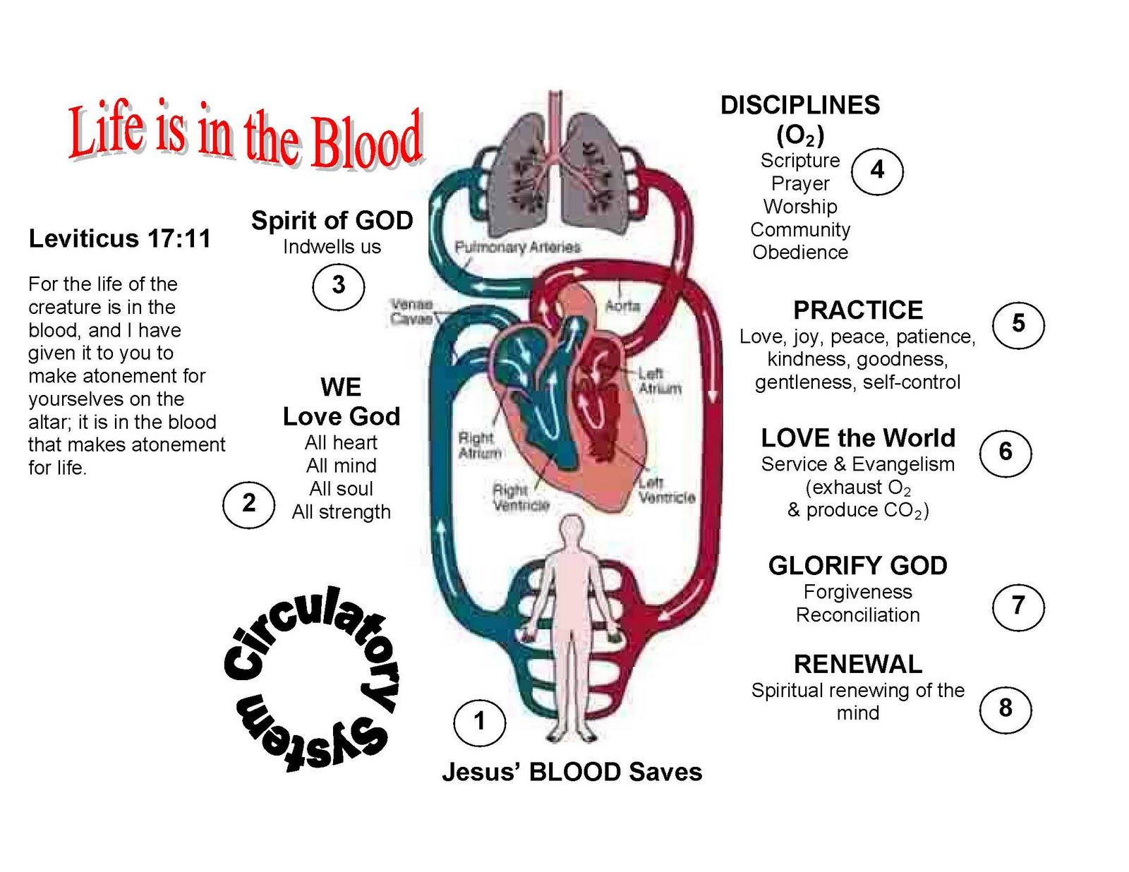 Circulatory System Worksheets Kids - Vintagegrn