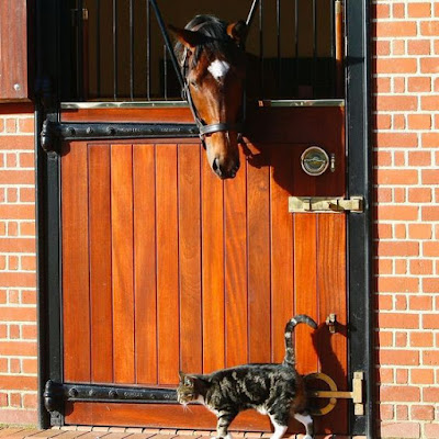 Frankel and George the cat