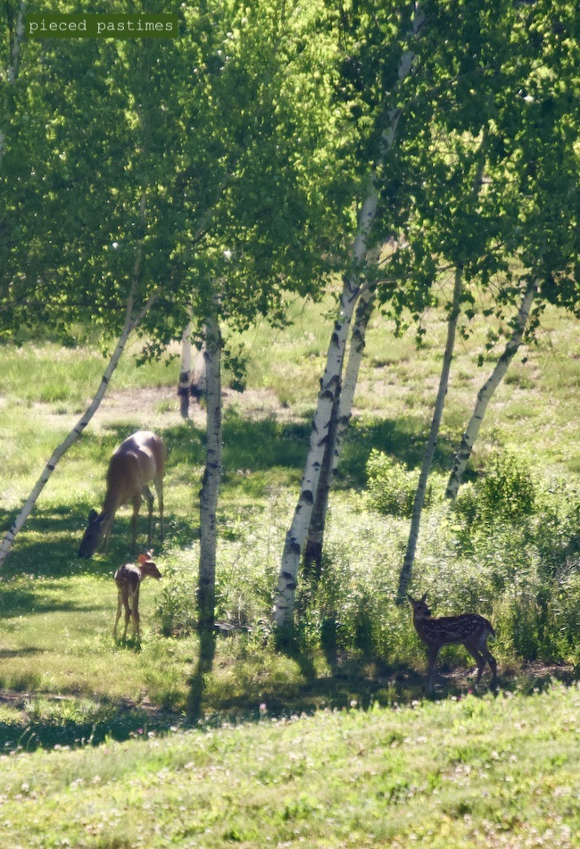 Doe with Twins at Pieced Pastimes