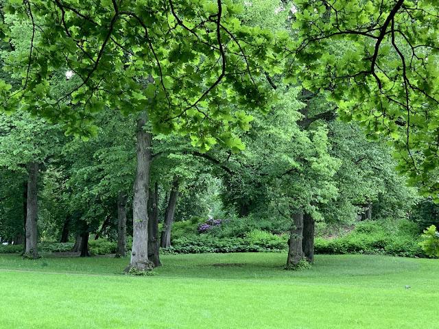 Slottsparken - en oase i hovedstaden vår, Oslo. Det er idag omtrent 1100 trær i parken  IMG_0247-min