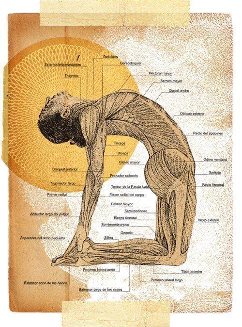 Ustrasana - Anatomy