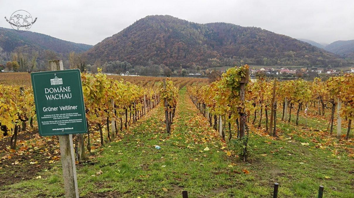 Dolina Wachau- kraina wina i moreli