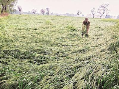 ओलावृष्टि से प्रभावित किसान