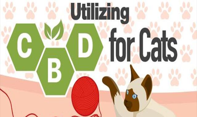 Utilizing CBD for Cats