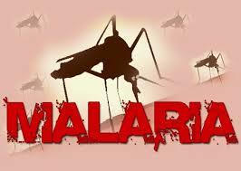 Ketahuilah Berbagai Penyakit Akibat Gigitan Nyamuk
