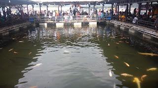 Kolam ikan Napak Sancang