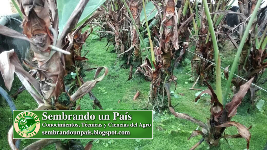 musgo en sustrato agrícola