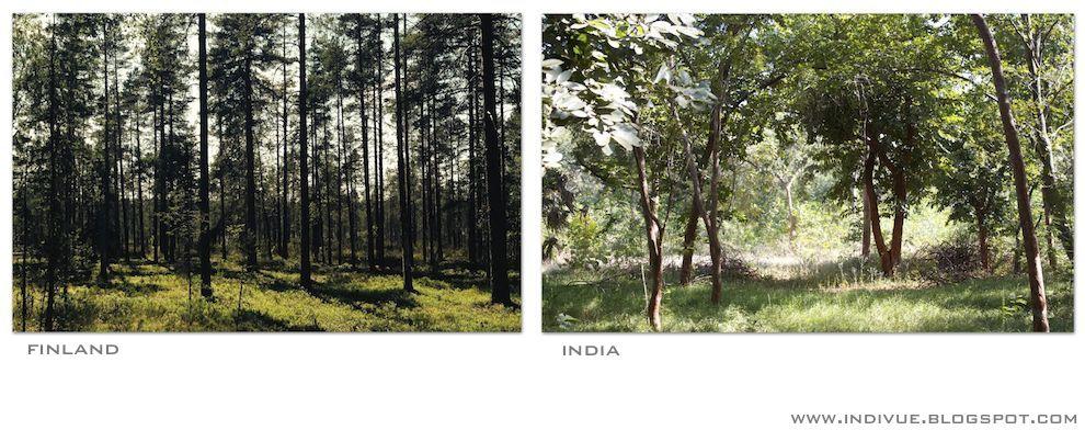 Suomalainen ja intialainen metsä