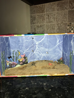 Ocean Biome in a Shoebox