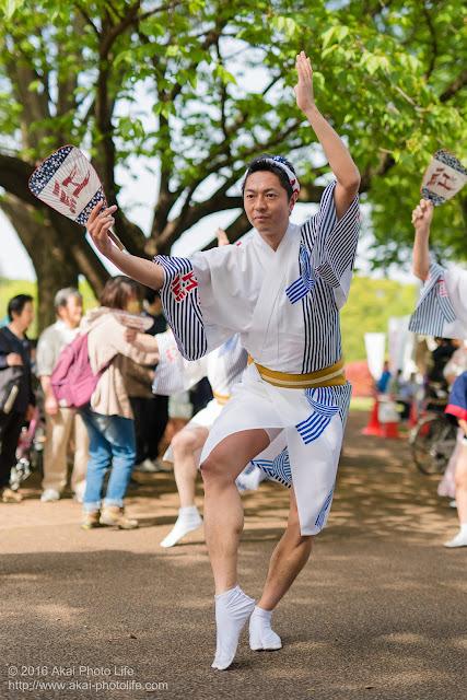 紅連、小金井子供フェスタでの阿波踊り、男踊り