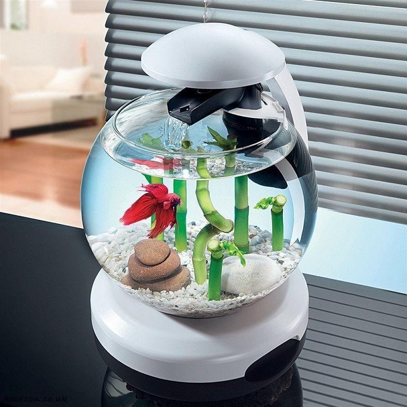 Kisaran Harga Aquarium Bulat Berbagai Ukuran