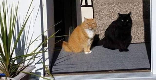 هل تشاهد في الصورة قطة واحدة ام قطتين !!   شاهد كم قطة فى الصورة ولا تتسرع !